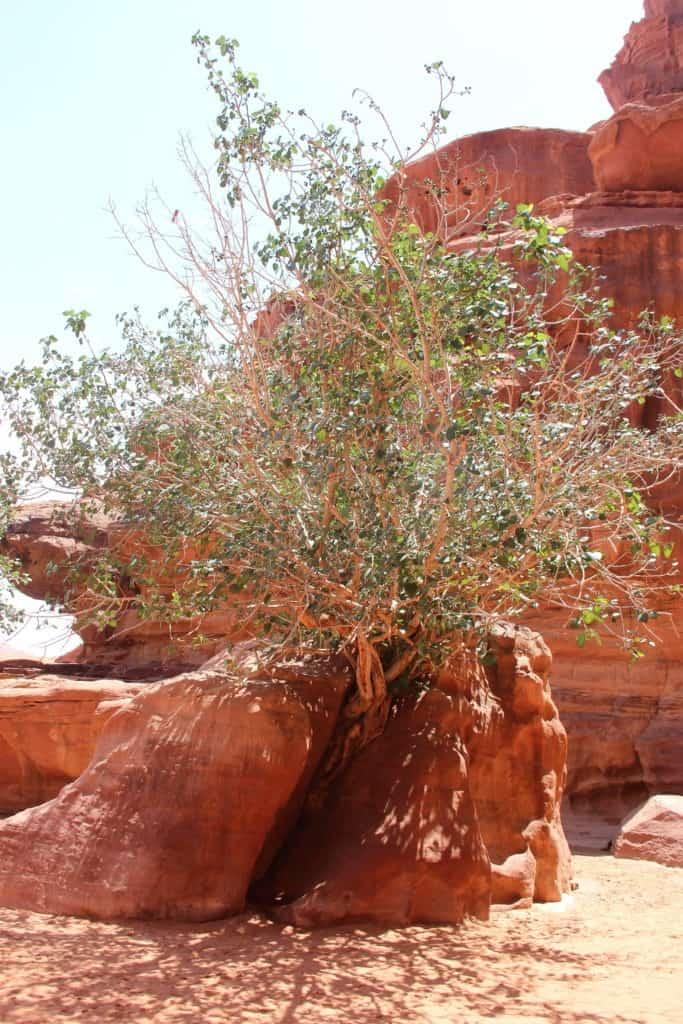 Visiter la Jordanie en 10 jours